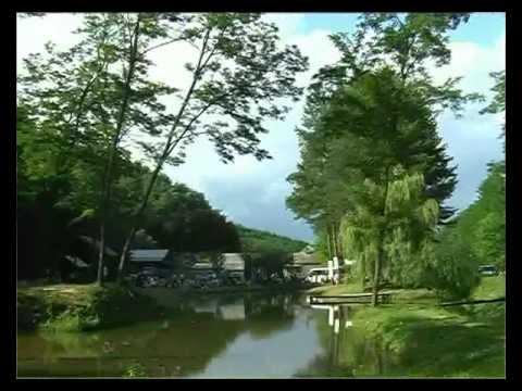 Muzsikál az erdő - Mátrai művészeti napok; Természet és Zene