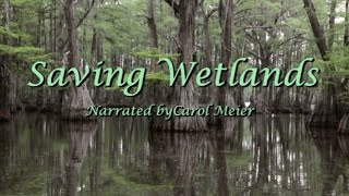 Female Nature/Wildlife Documentary Narrator - Saving Wetlands - Carol Meier - SUBTITLED