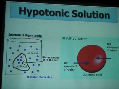 Animal cells always burst in hypotonic condition. (Conc. in the cell is more