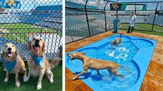 DOG PARK & POOL IN NFL STADIUM!