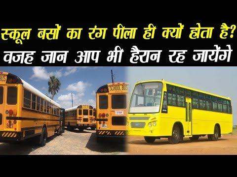 BB News : आखिर स्कूल बसों का रंग पीला ही क्यों होता है? जान लीजिए ये आपके लिए सबसे जरूरी बात है?