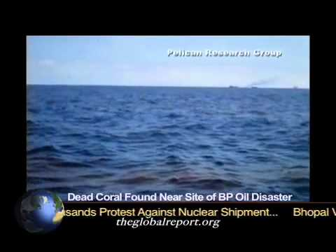 Dead Coral Found Near Site Of BP Oil Disaster
