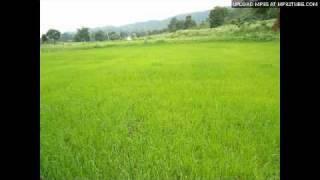 Pattakathi Bairavan - Engengo Sellum
