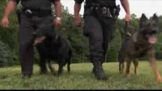 Dogs 101 German Shepherd Video Animal Planet