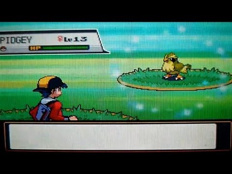 LIVE! Shiny Pidgey on Route 5 after 7,592 RE's! (SS)
