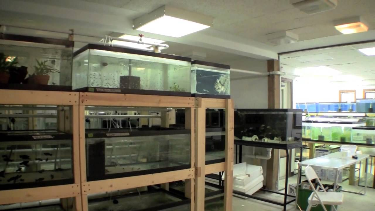 Ted's New Fishroom - Aquariums - YouTube