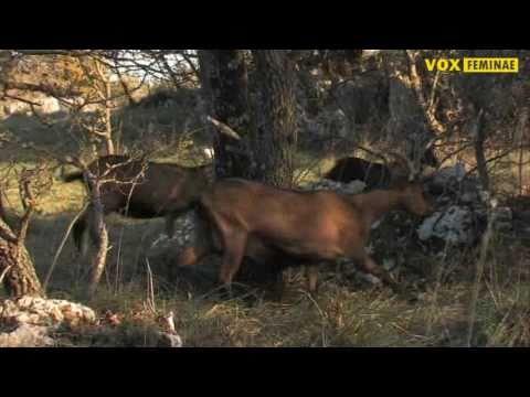 Farma koza 'Driade' - Hela Liverić