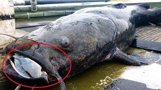 9 Fish That Hunt Land Animals