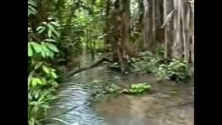 Amazzonia di Claudio Barberis Video AIC 1999 1° parte