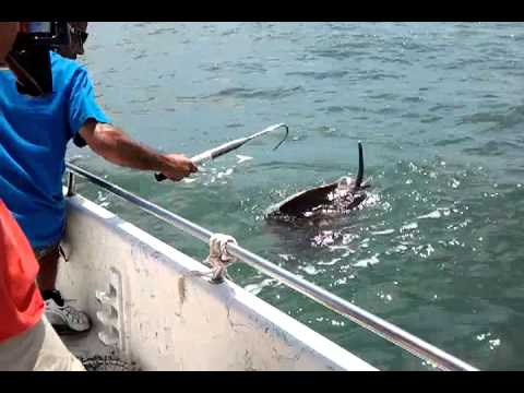 Galveston Fishing Video 1