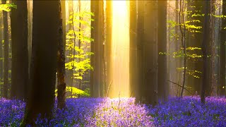 "Relaxing Sleep Music: Soothing Meditation Music, Stress Relief, ""The Secret Forest"" by Tim Janis"
