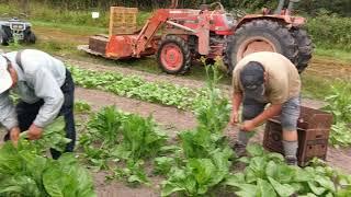 Hmong Seattle Farming(1)