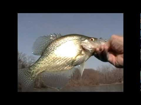Panfish Assassin for Nice Crappie