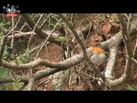 Vida Selvagem - Arrábida, Portugal.avi