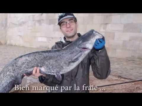 Łowienie Sumów W Paryżu Na Tyczkę Milo Gerardix 1750