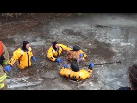 湖の氷が割れ落ち出られなくなった犬を救助するレスキュー隊