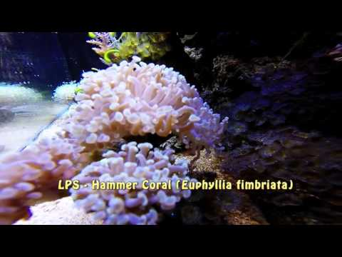 My Marine Reef - Coral update and identification