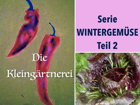 Serie Wintergemüse Teil 2: Balkongemüse im Winter ernten