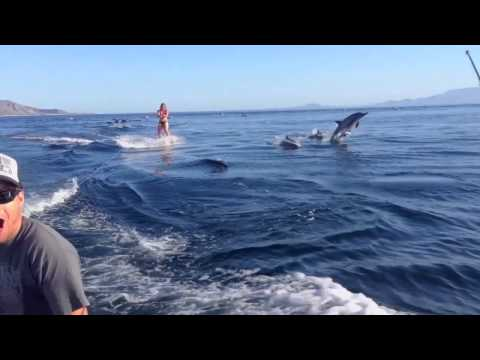 Dolphin Surfing, Woman Wakeboarding With Dolphins As Seen On Tv (worldwide!!) video
