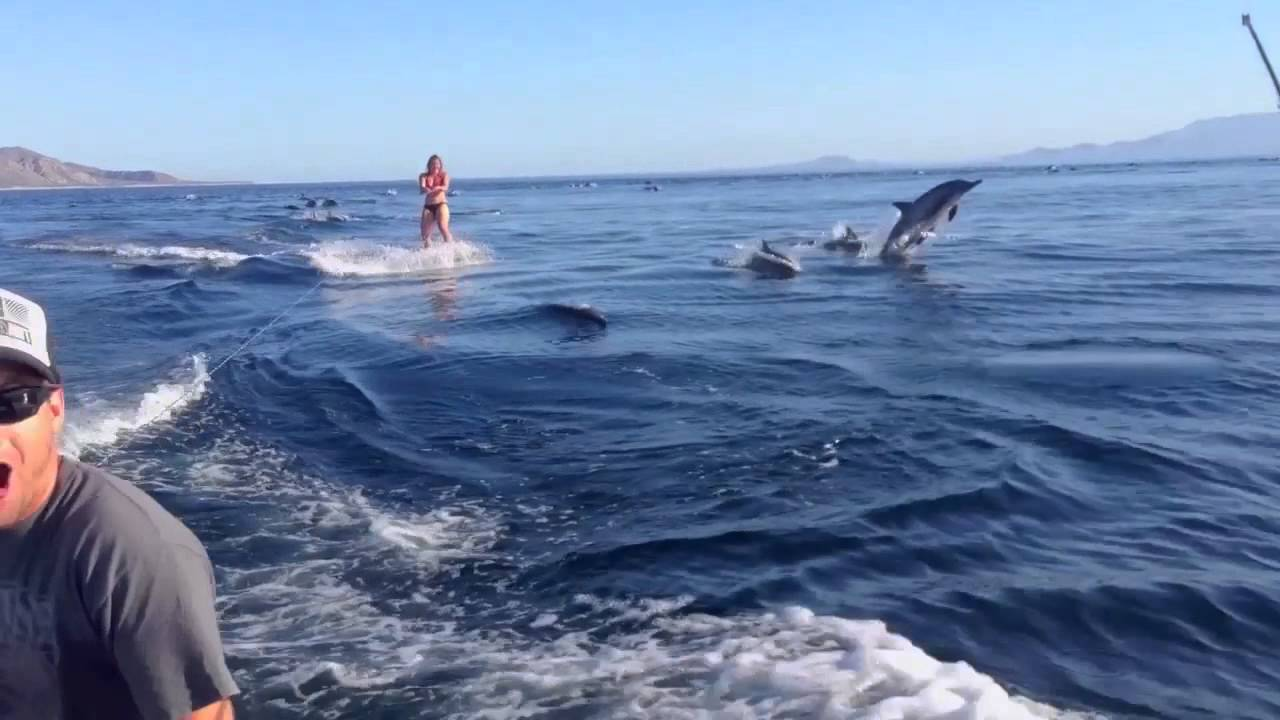 Dolphin Surfing Woman Wakeboarding With Dolphins As Seen