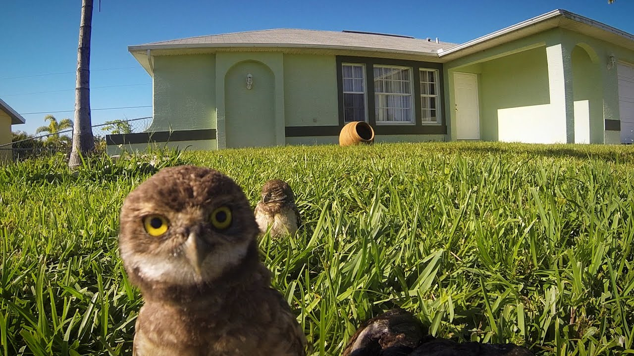 GoPro: Owl Dance-Off