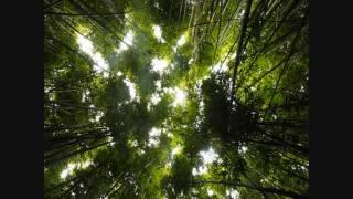 Watch Universal Hall Pass Avatar video