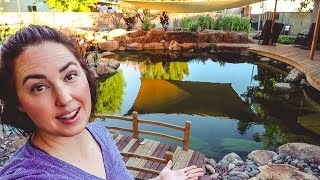 How much does a Swimming Pond COST? + other FAQ's!