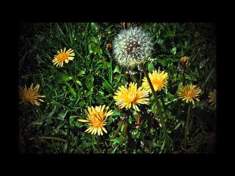 Jesienne Kwiaty I Nie Tylko...