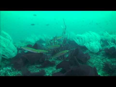 Redondo Beach, Palos Verdes, California, scuba, diving, artificial reef, C-Dory, Tomcat