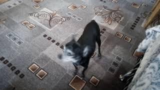 собака чпокнула кошку прикол 2018
