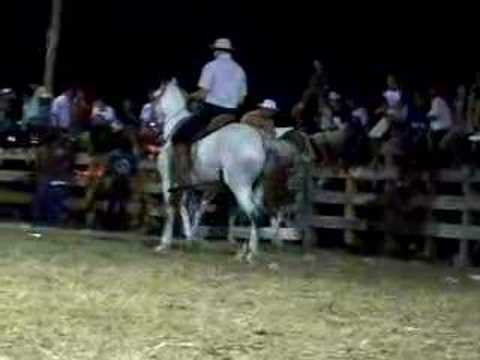 More Criollo Horse Video