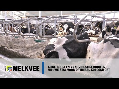 Open dag bij Alice Booij: nieuwe stal met optimaal koecomfort (video)