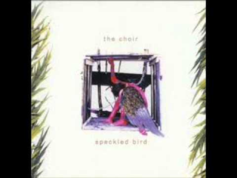 Choir - Speckled Bird