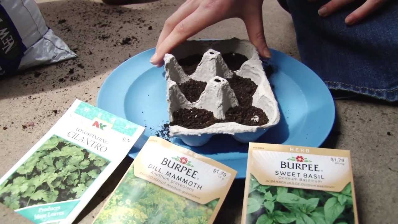 How to start seeds in recycled egg cartons indoors youtube for How to recycle egg cartons