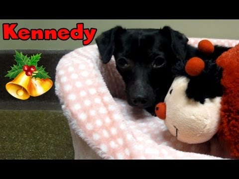 Dog Rescue in Watts, California: Kennedy.