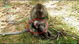Old mother monkey angry with her baby