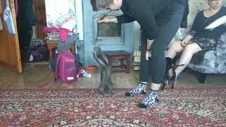 Прикол над котом