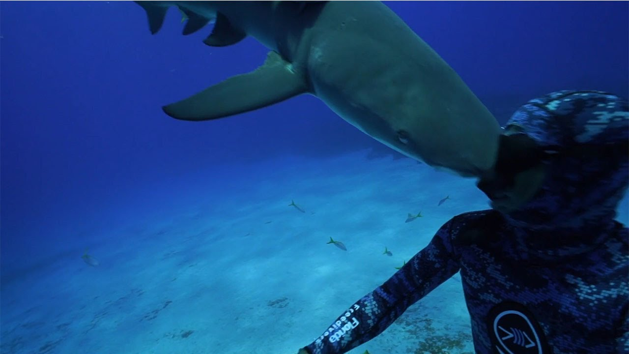[The Second Most Effective Weapon A Shark Has: Headbutts] Video