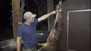 Cleaning a wild boar {One Take} No edits! DeerMeatForDinner