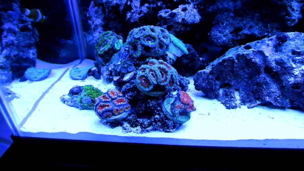 Part 2 in hd my 29 gallon marine salt water aquarium coral for Saltwater fish tank lights