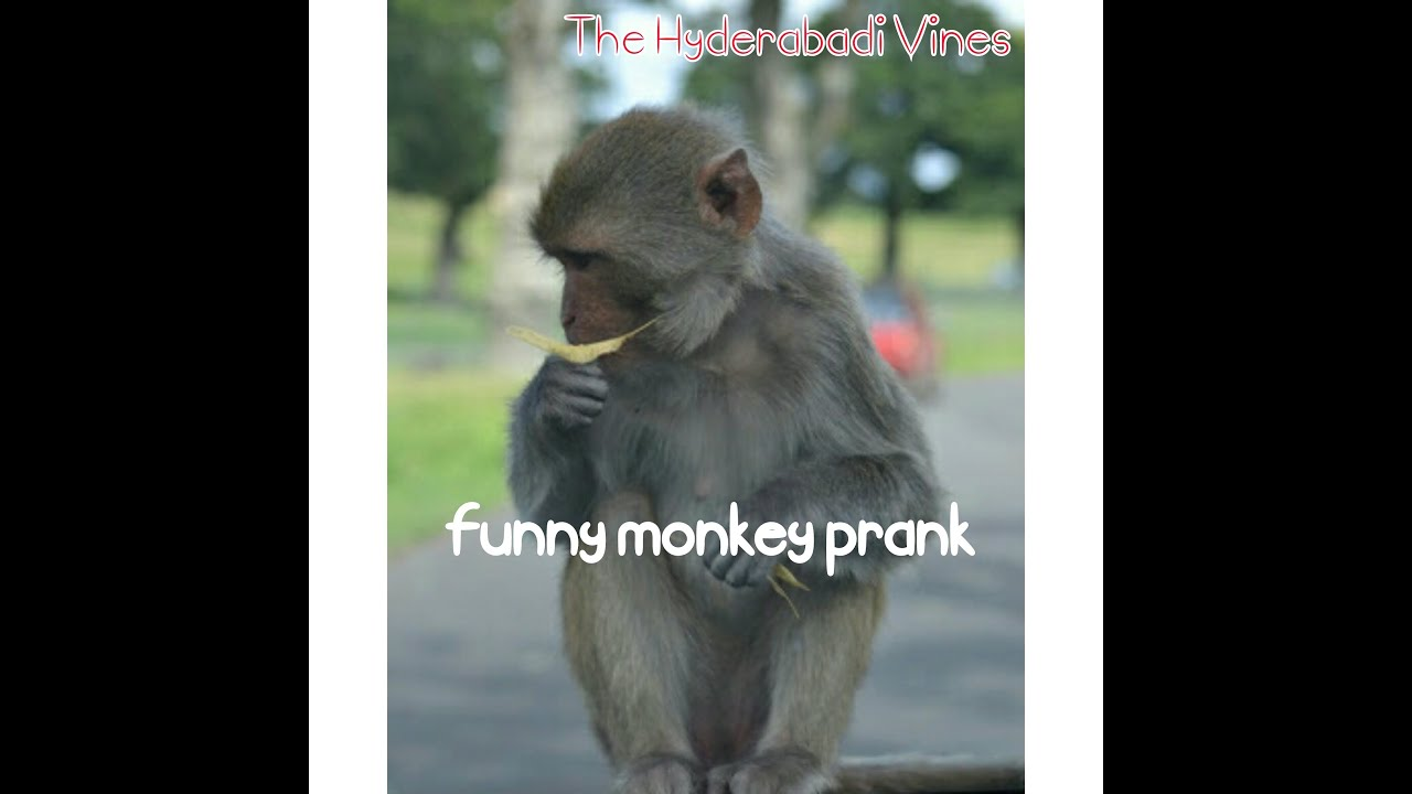 Funny monkey pictures with captions