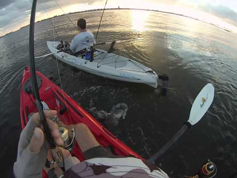 Sarasota Kayak Fishing with Casting Kayaks