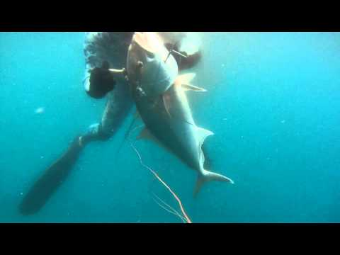 12 02 17 Freediving Tarpon Springs