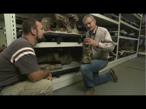 Inside View: World's Largest Dinosaurs