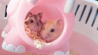 GETTING MY NEW HAMSTERS 🐹
