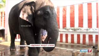 The playful and talented Sankarankoil Elephant attracts crowd