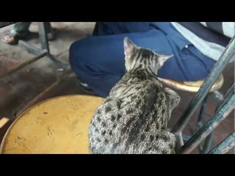 Punjab Cat Disregarding any popular callsigns