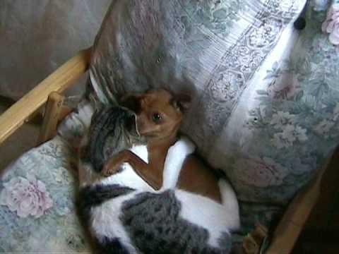 Pop Porno Cane Gatto  Abbracciati Divertente Aridox Comico  Dog  Cat   Hard Cuccioli Fanno Sesso video