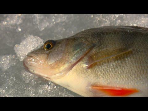 Рыбак Рыбаку 469 За крупным окунем на первый лед.