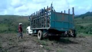 Carregando o caminhão de cana